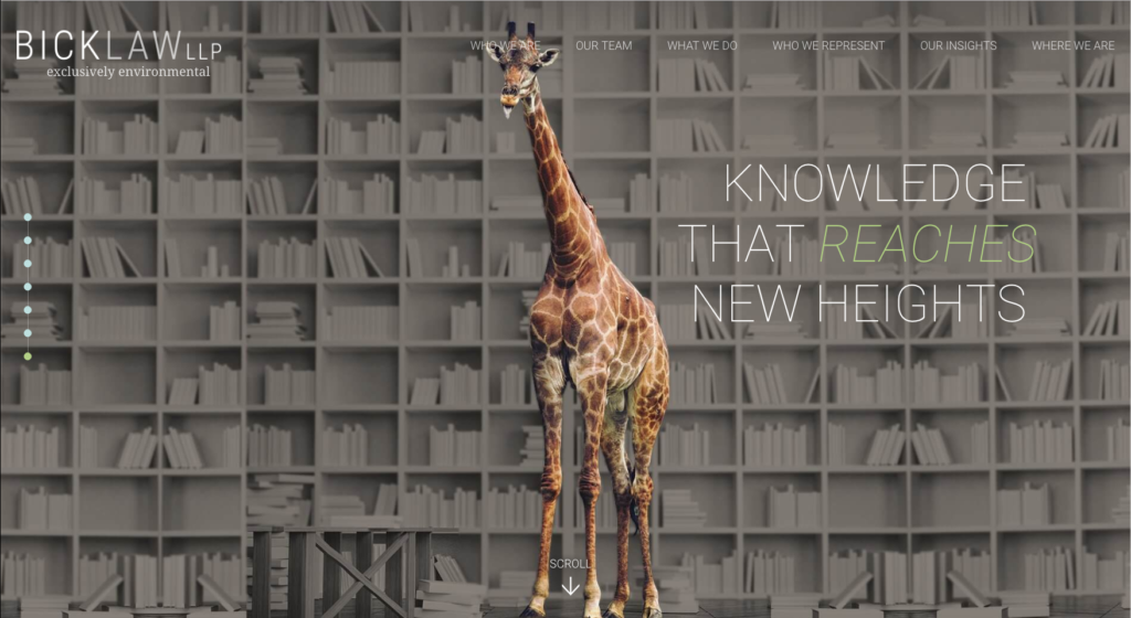 bick law knowledge that reaches new heights giraffe